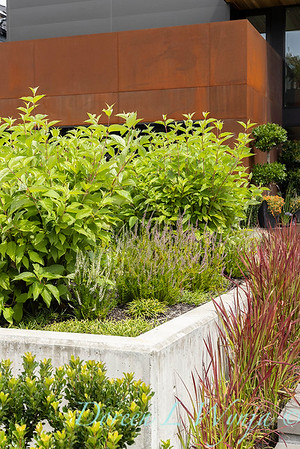Robin Parsons garden designer - West Seattle project_2513