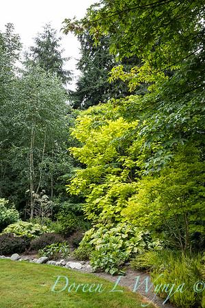 Sara's garden among the trees_143