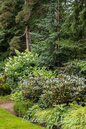 Sara's garden among the trees_150