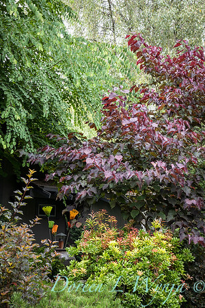 Sara's garden among the trees_127