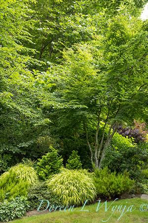 Sara's garden among the trees_163