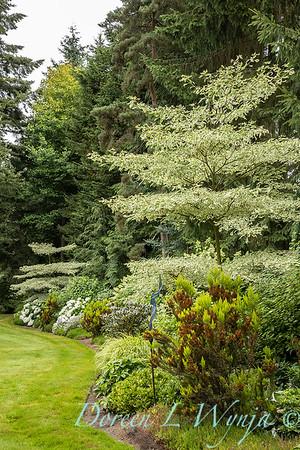 Sara's garden among the trees_147