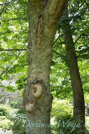 Sara's garden among the trees_120