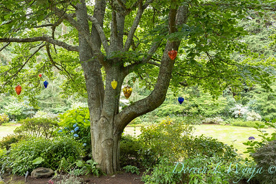 Sara's garden among the trees_137