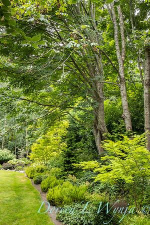 Sara's garden among the trees_142