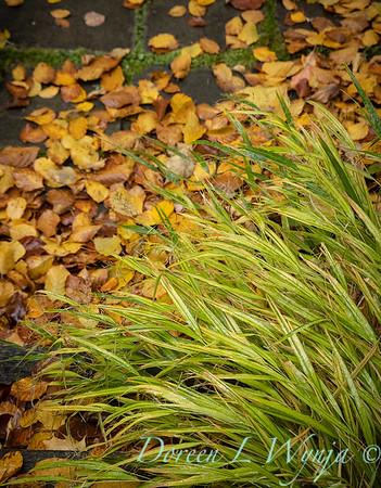 Sara's fall garden_217
