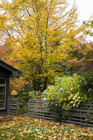 Sara's fall garden_213