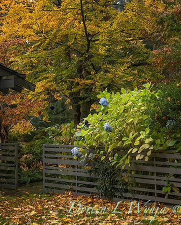 Sara's fall garden_212
