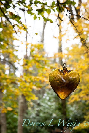 Sara's fall garden_220