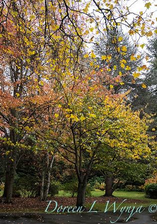 Sara's fall garden_246