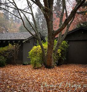 Sara's fall garden_245