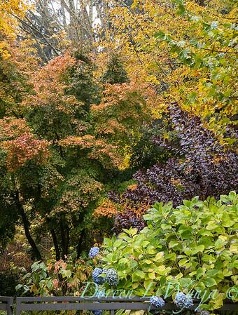 Sara's fall garden_216