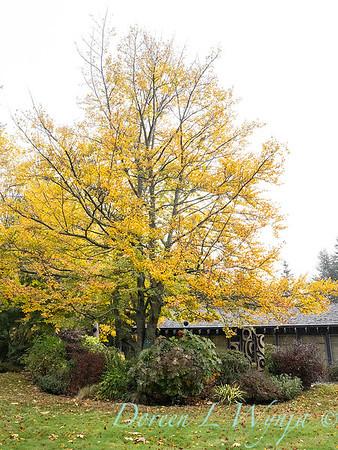 Sara's fall garden_240