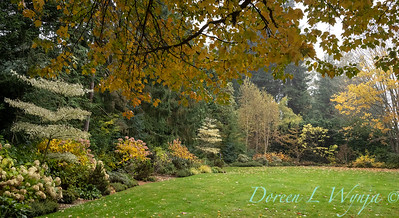 Sara's fall garden_242