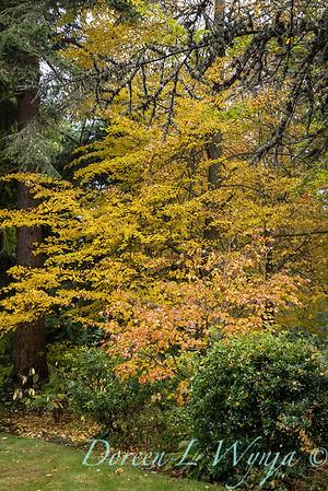 Sara's fall garden_209