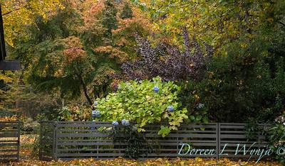 Sara's fall garden_214