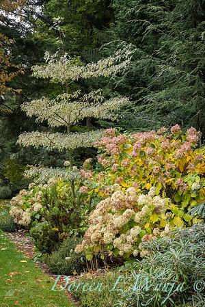 Sara's fall garden_231