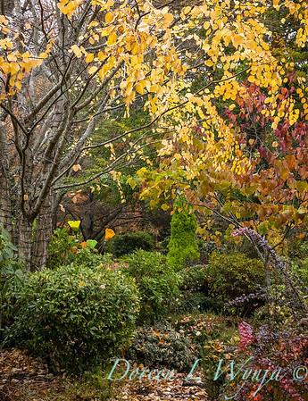 Sara's fall garden_224