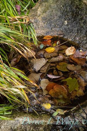 Sara's fall garden_208