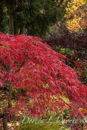 Sara's fall garden_211