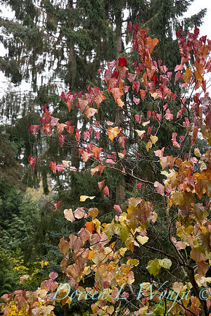 Sara's fall garden_226