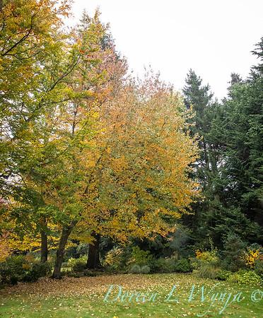 Sara's fall garden_233