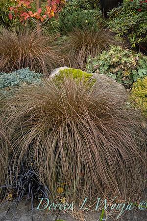 Sara's fall garden_206