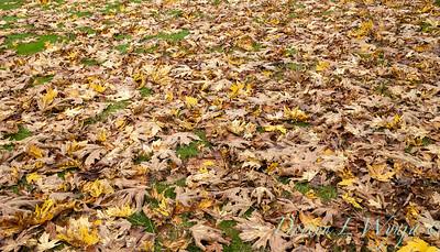 Sara's fall garden_227