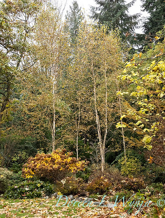 Sara's fall garden_229