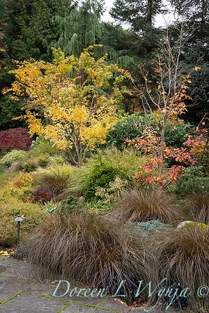 Sara's fall garden_204