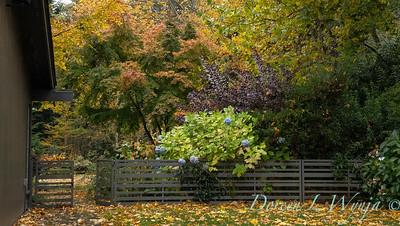 Sara's fall garden_215