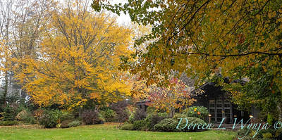 Sara's fall garden_236
