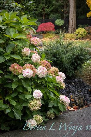 Sara's fall garden_202