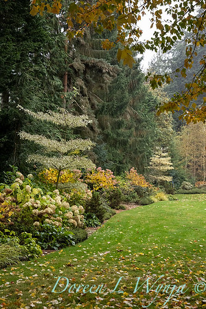Sara's fall garden_241