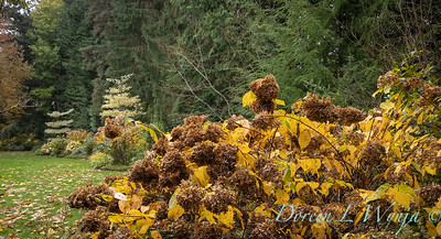 Sara's fall garden_230