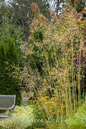 Shoreline project - Stacie Crooks garden designer_3054