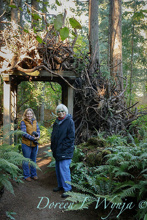 Susan Calhoun and Pat Riehl in the stumpery_0451