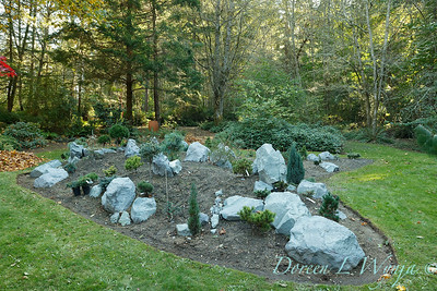 The new conifer garden mounds_6916