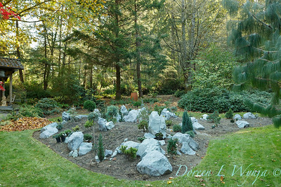 The new conifer garden mounds_6917