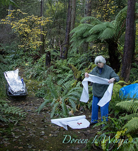 Dicksonia antarctica - Pat wrapping fern for winter_7021