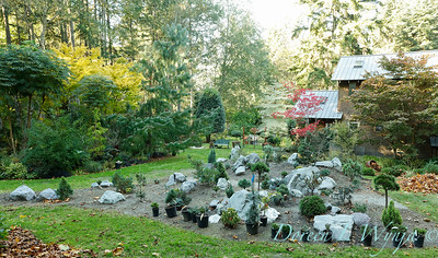 The new conifer garden mounds_6919