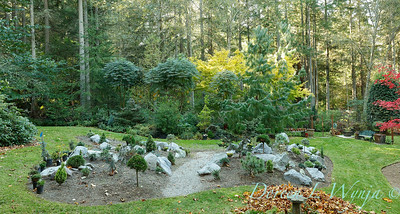 The new conifer garden mounds_6921