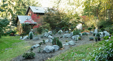 The new conifer garden mounds_6918