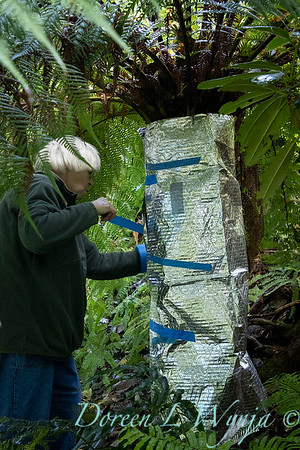 Dicksonia antarctica - Pat wrapping fern for winter_7016