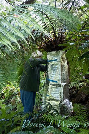 Dicksonia antarctica - Pat wrapping fern for winter_7011