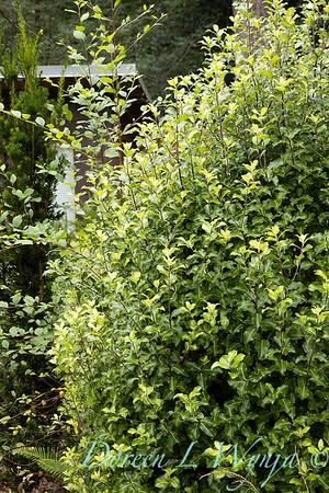 Pat & Walt garden space_317