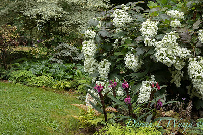 Pat & Walt garden space_326