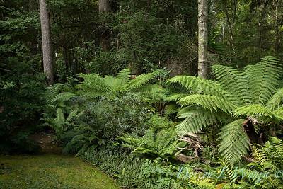 Pat & Walt stumpery garden_342