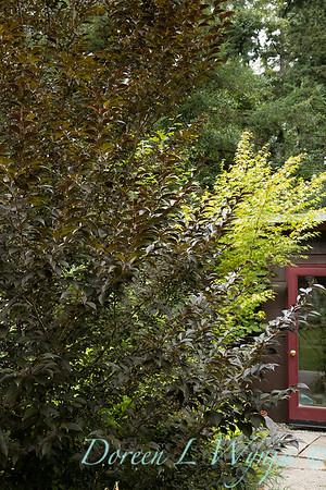 Styrax japonicus 'Evening Light' _391