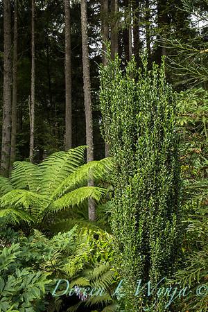 Pat & Walt garden space_341